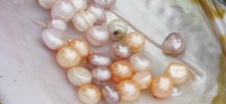 Freshwater Pearl Vs Saltwater Pearl